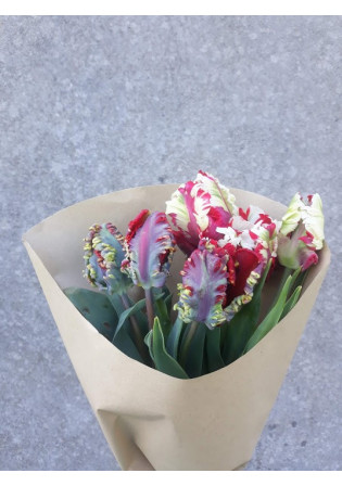 Bouquet de Tulipes 'Perroquet'